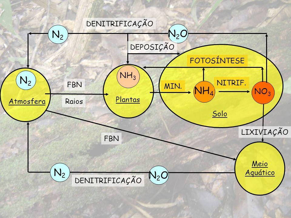Meio Aquático Atmosfera N2N2 Plantas NH 3 FBN NH 4 NO 3 MIN. NITRIF. DENITRIFICAÇÃO N2ON2O Solo FOTOSÍNTESE N2N2 DENITRIFICAÇÃO LIXIVIAÇÃO N2N2 N2ON2O