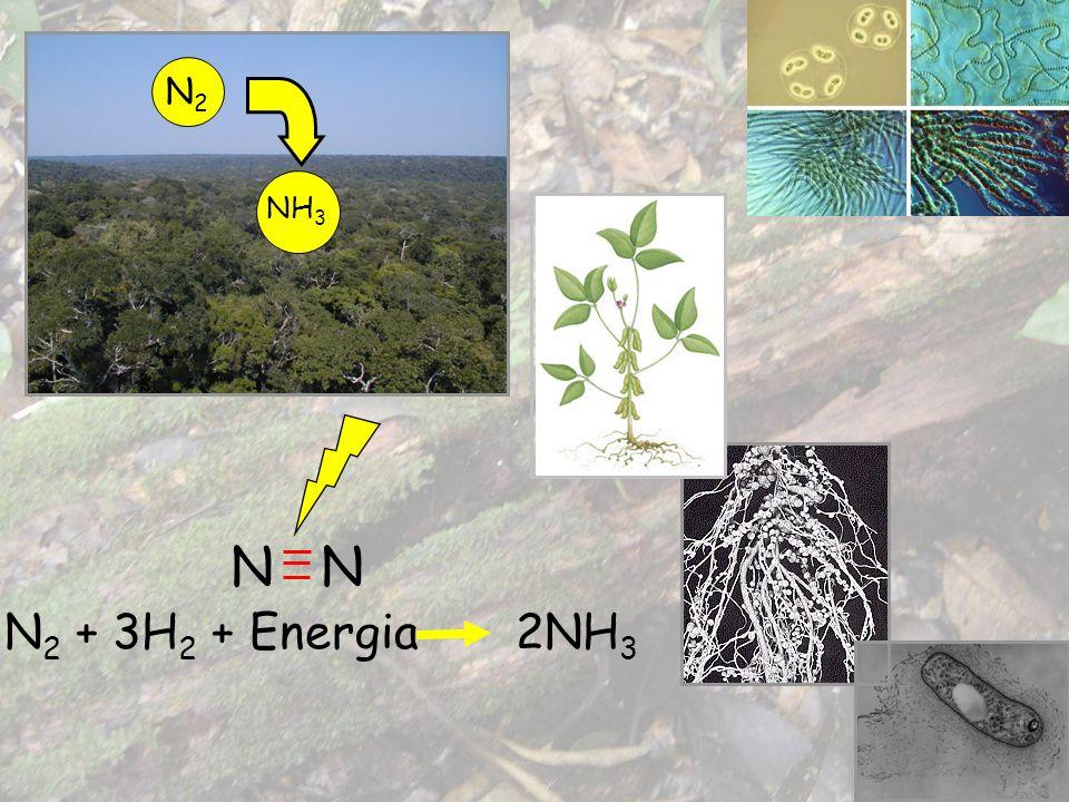 N N 2 + 3H 2 + Energia 2NH 3 N2N2 NH 3