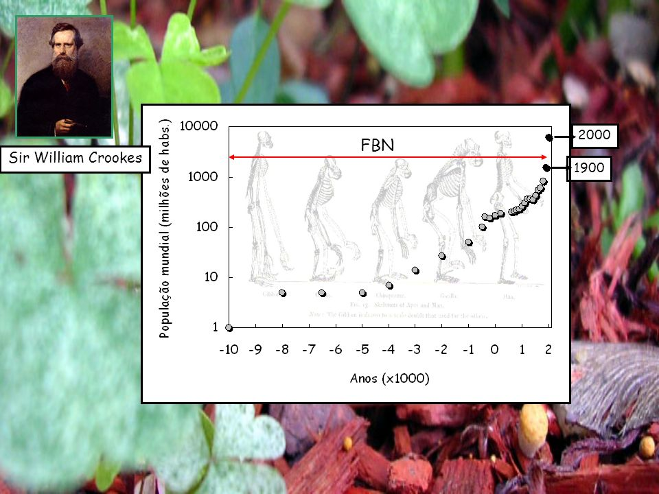 Fritz Haber (1864-1934) Prêmio Nobel em 1918 Síntese da amônia Primeiro teste em escala comercial: 1909 Carl Bosch (1874-1940) Prêmio Nobel em 1931 BASF – síntese da amônia em escala industrial Catalisador – Fe x Ur N 2(g) + 3H 2(g) 2NH 3(g) CH 4(g) + H 2 O (g) CO (g) + 3H 2(g) T – 450 o C P – 200atm O processo Haber-Bosch (1) Produção de Fertilizantes Nitrogenados