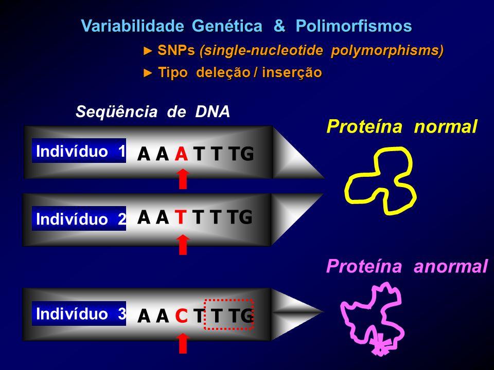 Variabilidade Genética & Polimorfismos SNPs (single-nucleotide polymorphisms) Tipo deleção / inserção Indivíduo 1 Indivíduo 2 Indivíduo 3 A A A T T TG
