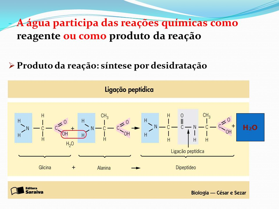 - A água participa das reações químicas como reagente ou como produto da reação Produto da reação: síntese por desidratação H 2 O