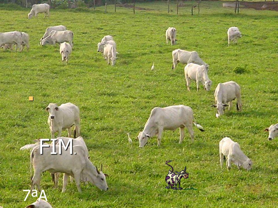 Pecuária é a arte ou o conjunto de processos técnicos usados na domesticação e criação de animais com objetivos econômicos, feita no campo.