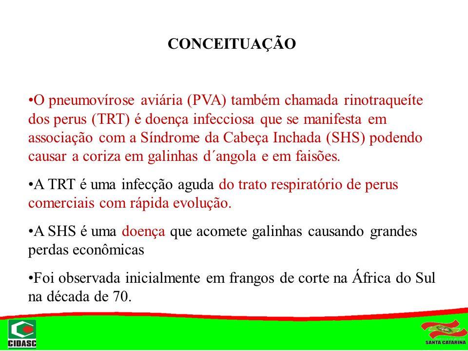 CONCEITUAÇÃO O pneumovírose aviária (PVA) também chamada rinotraqueíte dos perus (TRT) é doença infecciosa que se manifesta em associação com a Síndro