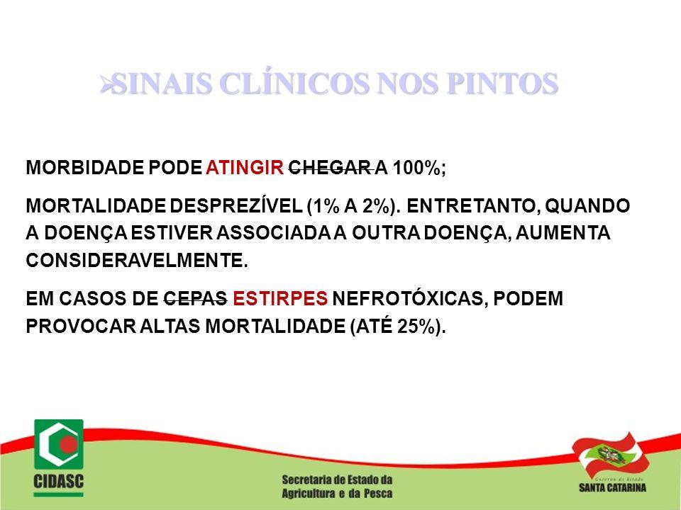 SINAIS CLÍNICOS NOS PINTOS SINAIS CLÍNICOS NOS PINTOS MORBIDADE PODE ATINGIR CHEGAR A 100%; MORTALIDADE DESPREZÍVEL (1% A 2%). ENTRETANTO, QUANDO A DO