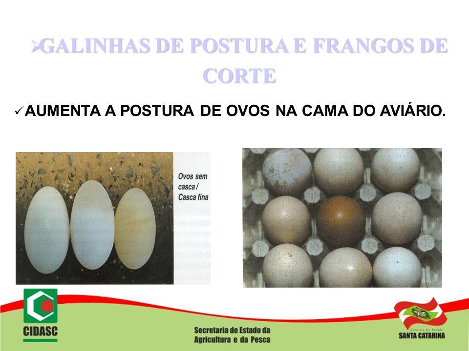 GALINHAS DE POSTURA E FRANGOS DE CORTE GALINHAS DE POSTURA E FRANGOS DE CORTE AUMENTA A POSTURA DE OVOS NA CAMA DO AVIÁRIO.