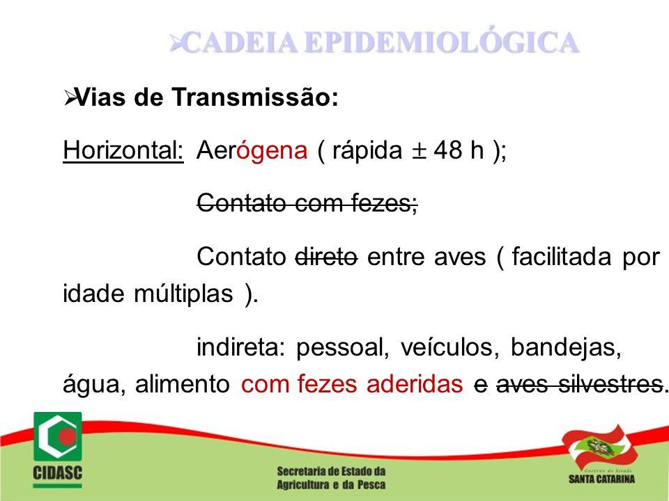 CADEIA EPIDEMIOLÓGICA CADEIA EPIDEMIOLÓGICA Vias de Transmissão: Horizontal:Aerógena ( rápida 48 h ); Contato com fezes; Contato direto entre aves ( f