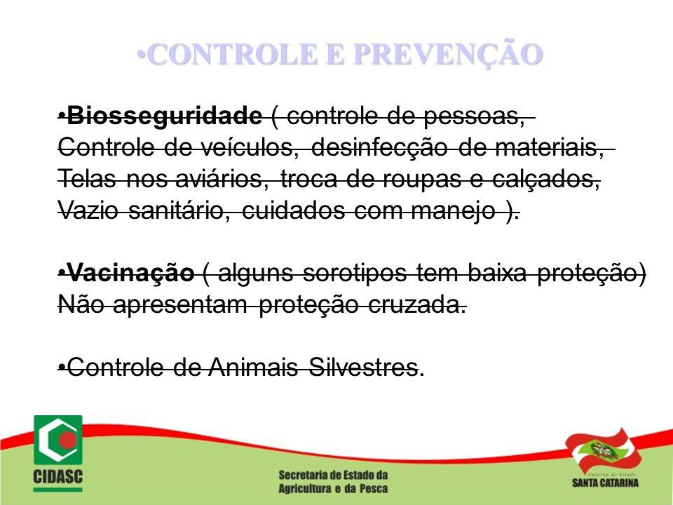 CONTROLE E PREVENÇÃOCONTROLE E PREVENÇÃO Biosseguridade ( controle de pessoas, Controle de veículos, desinfecção de materiais, Telas nos aviários, tro