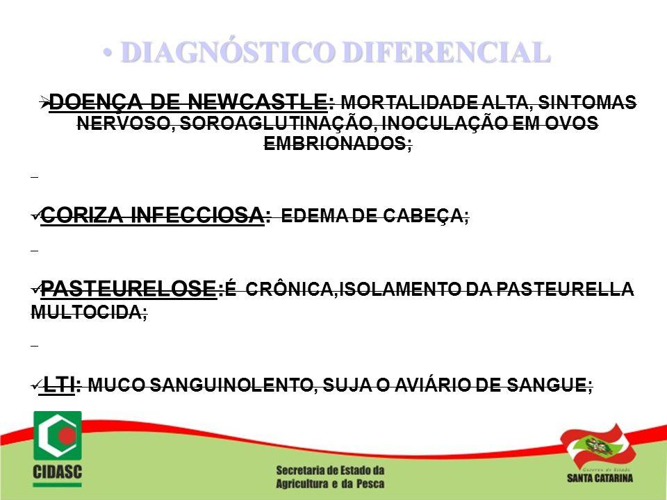 DIAGNÓSTICO DIFERENCIAL DIAGNÓSTICO DIFERENCIAL DOENÇA DE NEWCASTLE: MORTALIDADE ALTA, SINTOMAS NERVOSO, SOROAGLUTINAÇÃO, INOCULAÇÃO EM OVOS EMBRIONAD