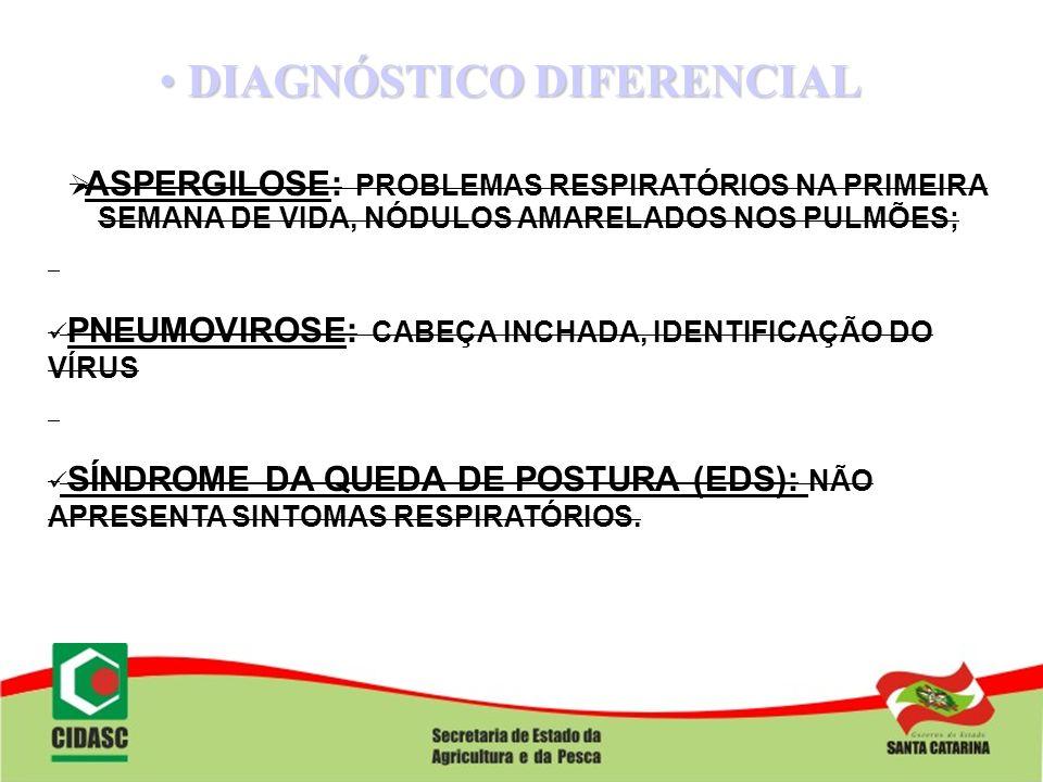 DIAGNÓSTICO DIFERENCIAL DIAGNÓSTICO DIFERENCIAL ASPERGILOSE: PROBLEMAS RESPIRATÓRIOS NA PRIMEIRA SEMANA DE VIDA, NÓDULOS AMARELADOS NOS PULMÕES; PNEUM
