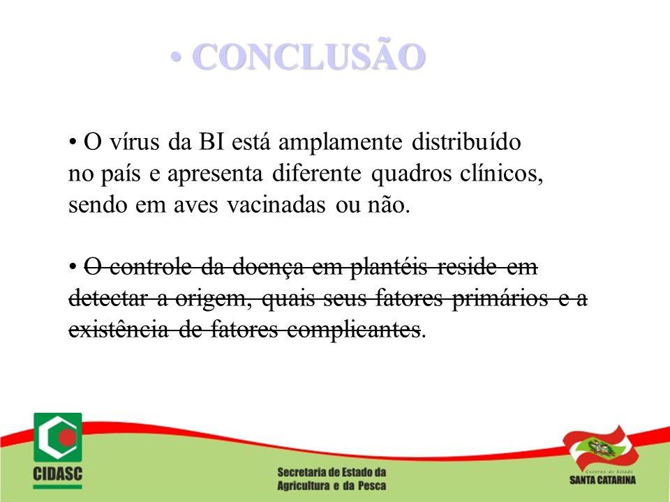 CONCLUSÃO CONCLUSÃO O vírus da BI está amplamente distribuído no país e apresenta diferente quadros clínicos, sendo em aves vacinadas ou não. O contro