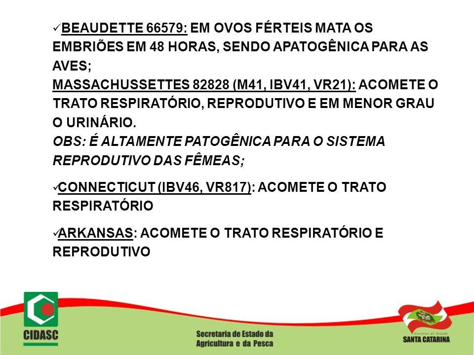 BEAUDETTE 66579: EM OVOS FÉRTEIS MATA OS EMBRIÕES EM 48 HORAS, SENDO APATOGÊNICA PARA AS AVES; MASSACHUSSETTES 82828 (M41, IBV41, VR21): ACOMETE O TRA