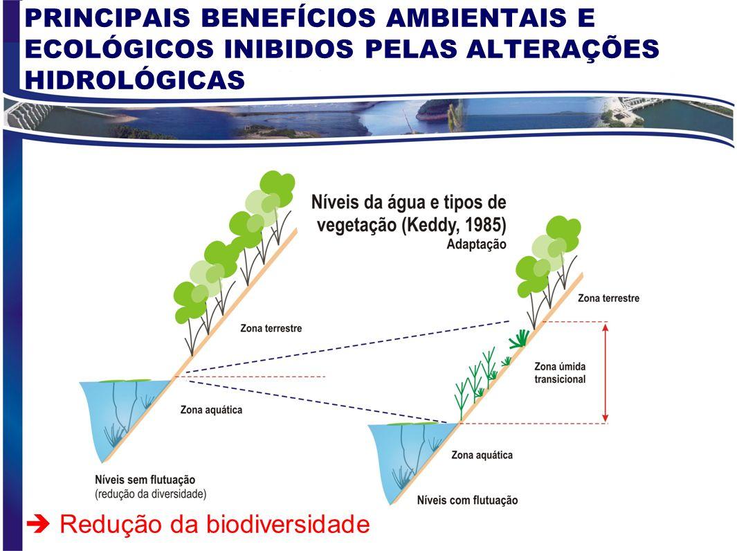 ALTERAÇÕES HIDROLÓGICAS NO RIO SÃO FRANCISCO 39 - 54 Pré-impacto 56 - 73 (PA I – Sob/PA IV) 80 - 87 Sob/PA IV – Itap 89 - 02 Após Itap Situação hidrol