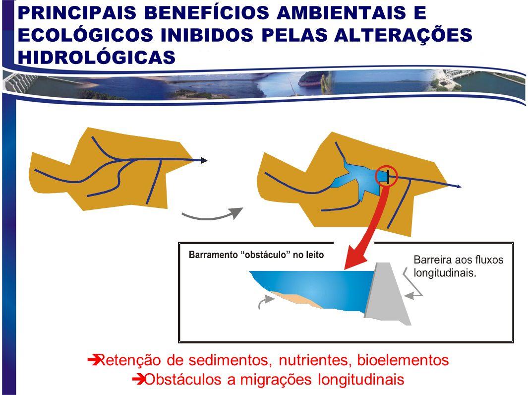 PRINCIPAIS BENEFÍCIOS AMBIENTAIS E ECOLÓGICOS INIBIDOS PELAS ALTERAÇÕES HIDROLÓGICAS Redução da biodiversidade