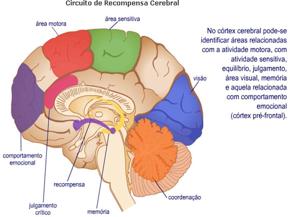 Cerca de nove segundos após a tragada, a nicotina chega ao cérebro pela corrente sangüínea, acelerando a transmissão dos impulsos nervosos entre os neurônios.