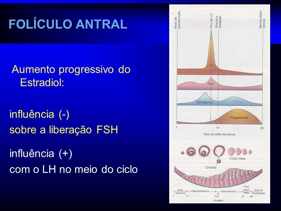 Aumento progressivo do Estradiol: influência (-) sobre a liberação FSH influência (+) com o LH no meio do ciclo