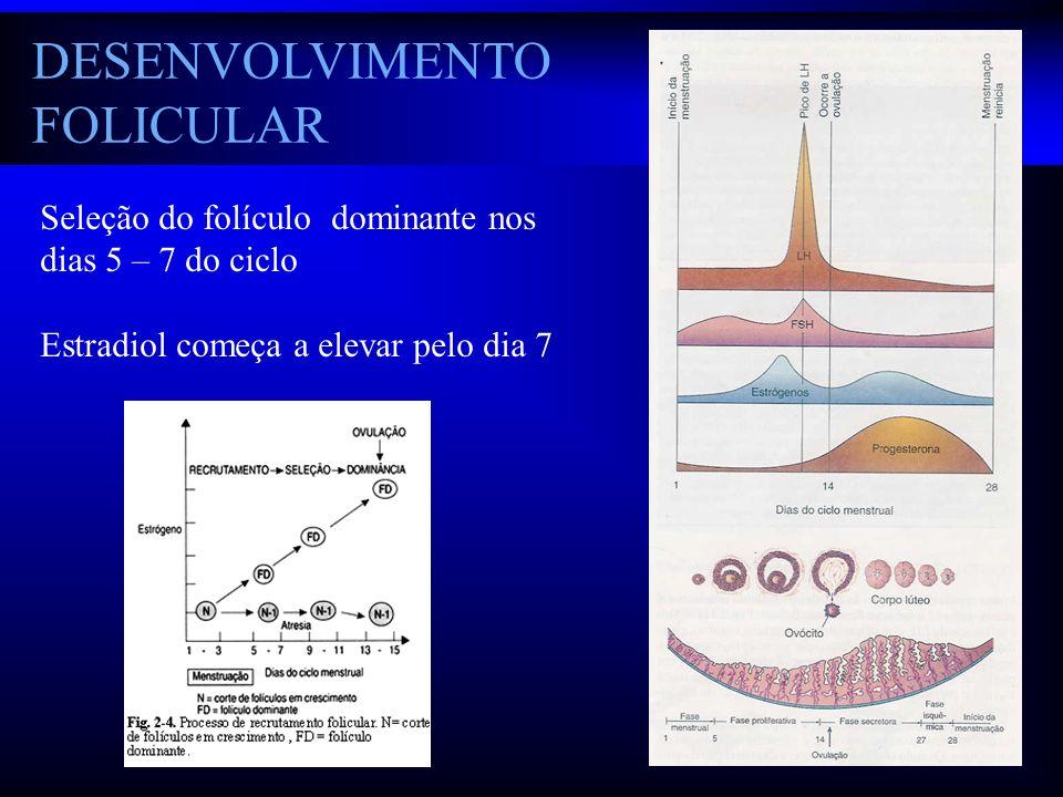 DESENVOLVIMENTO FOLICULAR Seleção do folículo dominante nos dias 5 – 7 do ciclo Estradiol começa a elevar pelo dia 7