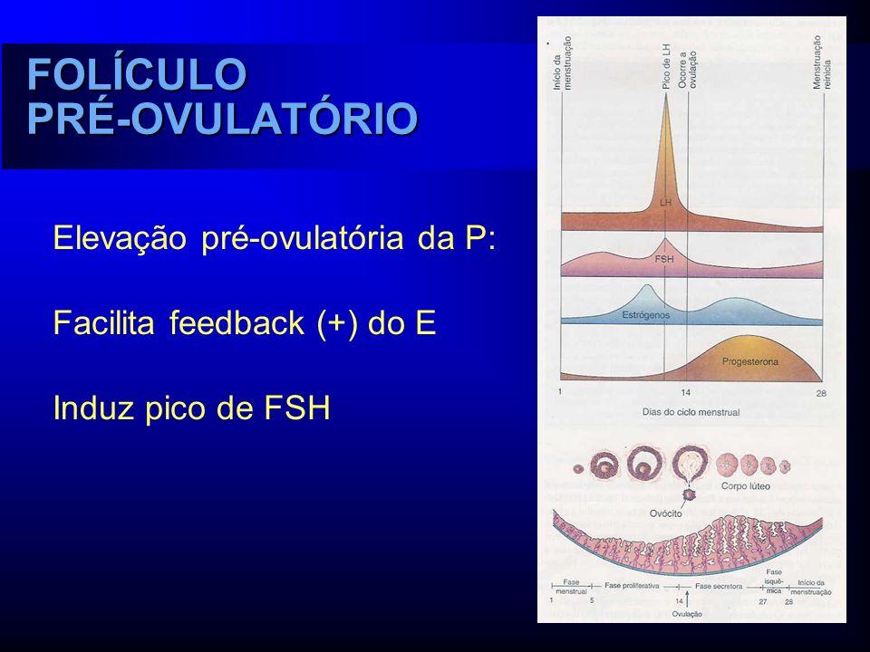 FOLÍCULO PRÉ-OVULATÓRIO Elevação pré-ovulatória da P: Facilita feedback (+) do E Induz pico de FSH