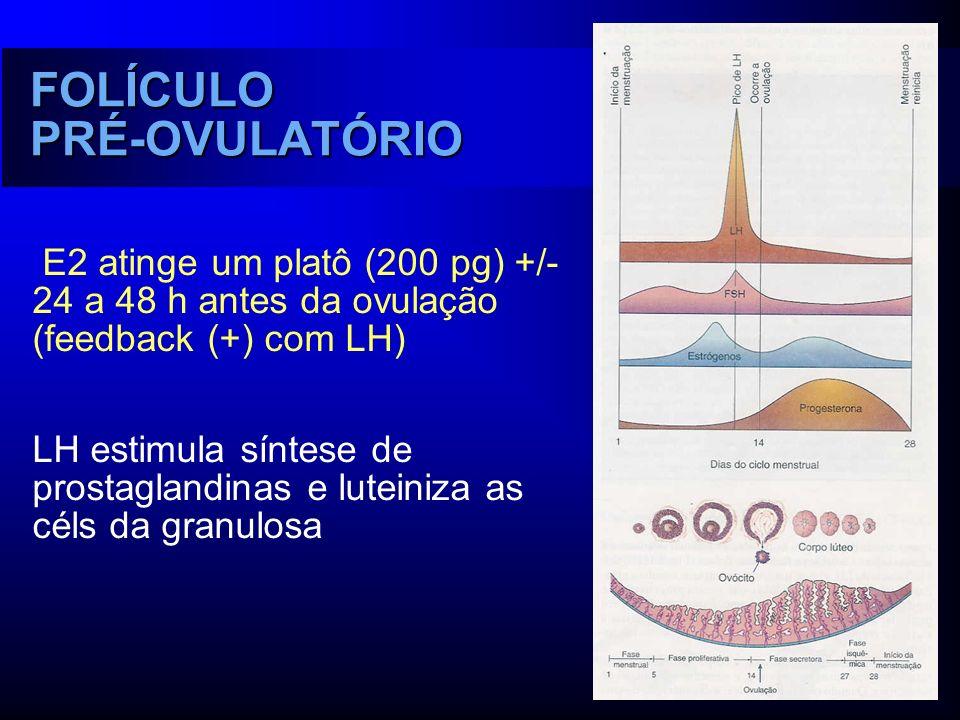 E2 atinge um platô (200 pg) +/- 24 a 48 h antes da ovulação (feedback (+) com LH) LH estimula síntese de prostaglandinas e luteiniza as céls da granul
