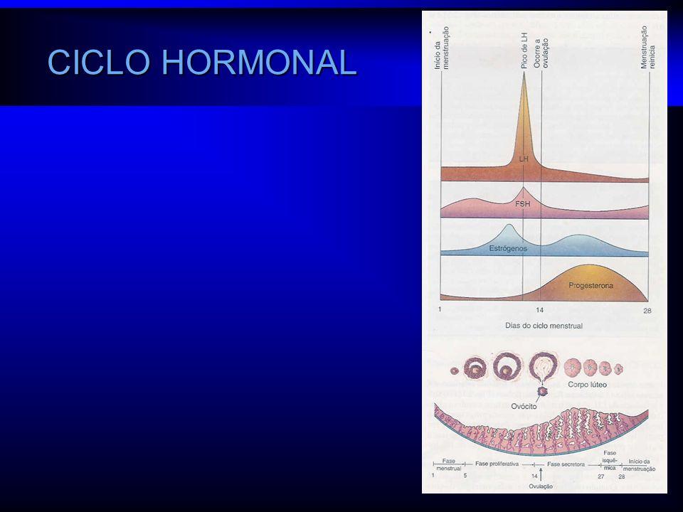CICLO HORMONAL