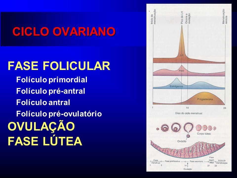 CICLO OVARIANO FASE FOLICULAR Folículo primordial Folículo pré-antral Folículo antral Folículo pré-ovulatório OVULAÇÃO FASE LÚTEA