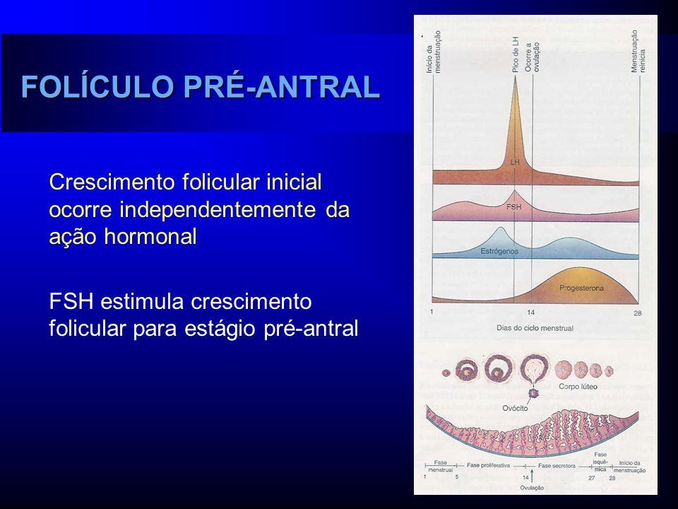 FOLÍCULO PRÉ-ANTRAL Crescimento folicular inicial ocorre independentemente da ação hormonal FSH estimula crescimento folicular para estágio pré-antral