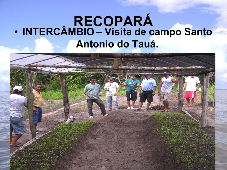 RECOPARÁ INTERCÂMBIO – Visita de campo Santo Antonio do Tauá.