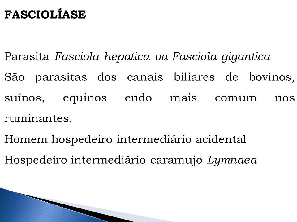 www.infoescola.com