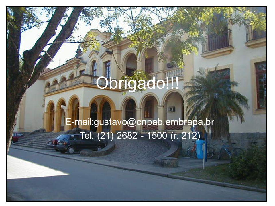 Obrigado!!! E-mail:gustavo@cnpab.embrapa.br Tel. (21) 2682 - 1500 (r. 212)