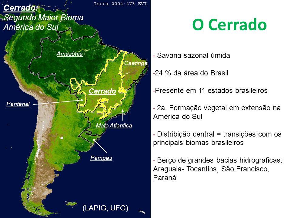 Cerrado - HOJE 35 % de toda a produção de grãos no Brasil - 58 % da produção brasileira de soja mais de 70% da produção de carne bovina do País (Pecuária de corte no Brasil Central, Corrêa 1989) Produção de energia: P/ cada tonelada de ferro-gusa 0,7 tonelada de carvão vegetal.