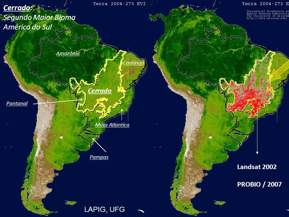 South American and the two largest Brazilian biomes Amazônia Cerrado Cerrado: Segundo Maior Bioma América do Sul Caatinga Mata Atlantica Pampas Pantan
