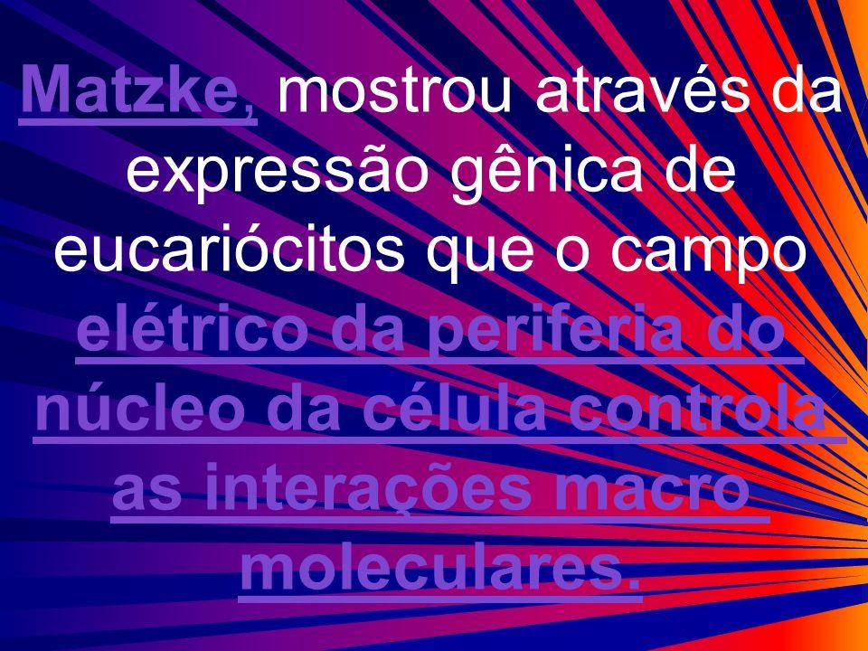Matzke, mostrou através da expressão gênica de eucariócitos que o campo elétrico da periferia do núcleo da célula controla as interações macro molecul