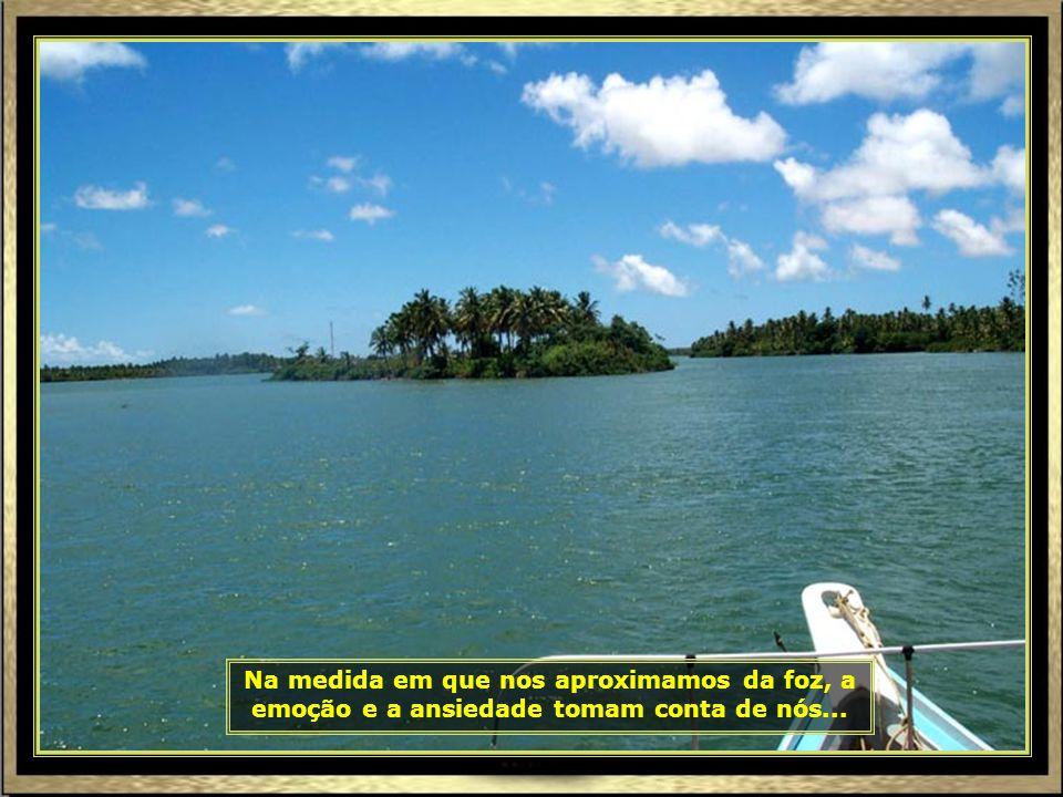 Piaçabuçu, em Alagoas, é o último município banhado pelo São Francisco antes de sua foz. Seu nome tem origem na língua tupi-guarani piaçava (palmeira)