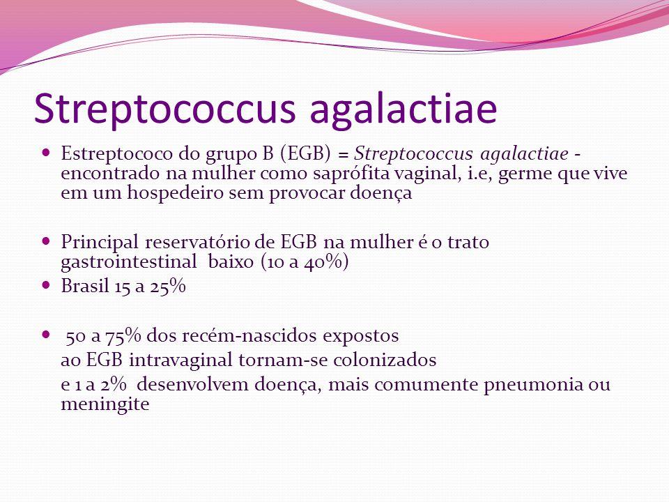 Streptococcus agalactiae Estreptococo do grupo B (EGB) = Streptococcus agalactiae - encontrado na mulher como saprófita vaginal, i.e, germe que vive e