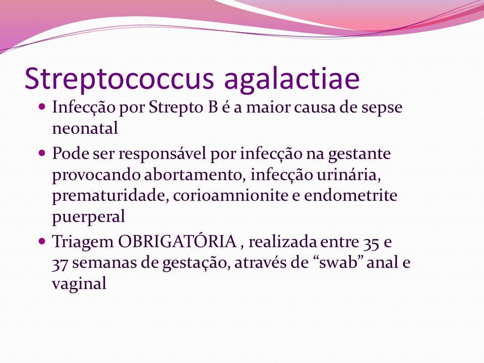 Streptococcus agalactiae Infecção por Strepto B é a maior causa de sepse neonatal Pode ser responsável por infecção na gestante provocando abortamento