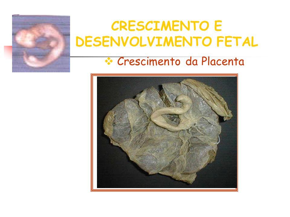 CRESCIMENTO E DESENVOLVIMENTO FETAL Crescimento da Placenta