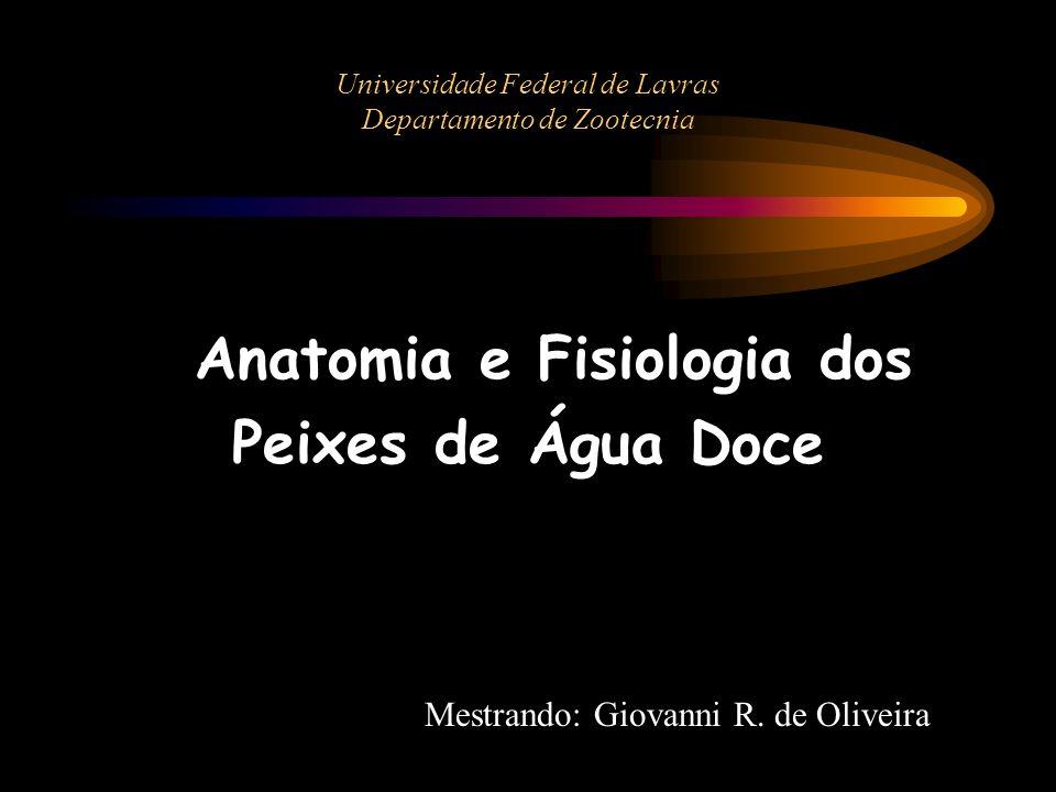 Universidade Federal de Lavras Departamento de Zootecnia Anatomia e Fisiologia dos Peixes de Água Doce Mestrando: Giovanni R. de Oliveira