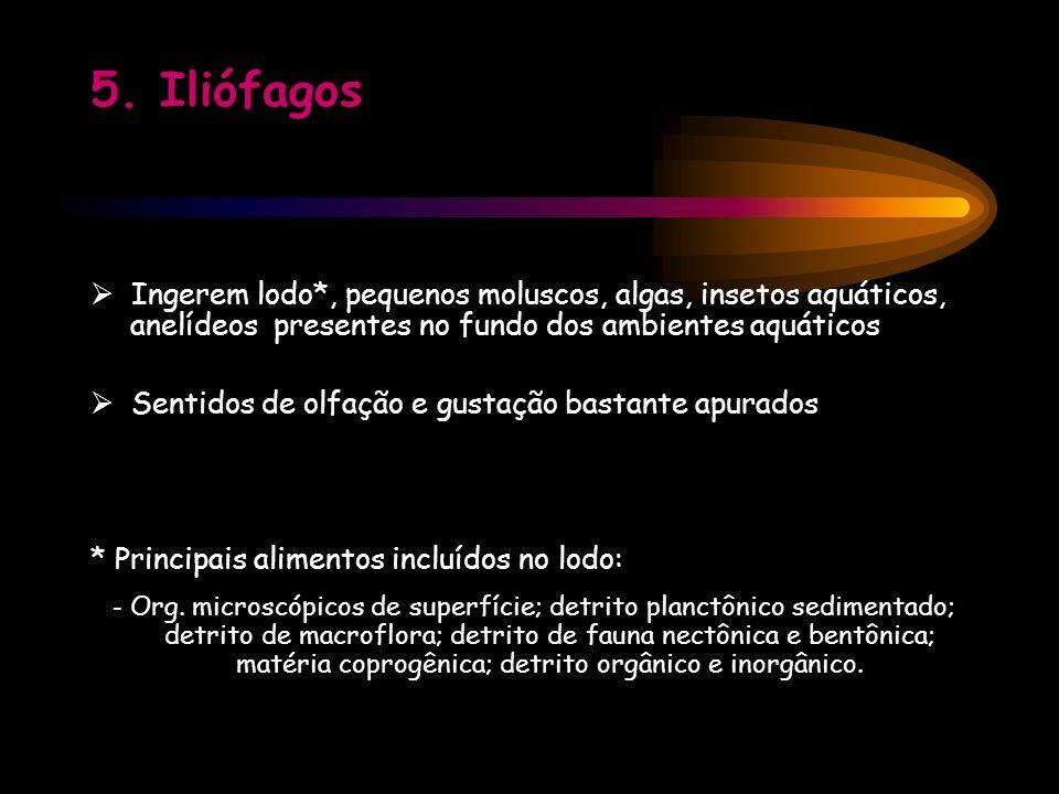 5. Iliófagos Ingerem lodo*, pequenos moluscos, algas, insetos aquáticos, anelídeos presentes no fundo dos ambientes aquáticos Sentidos de olfação e gu