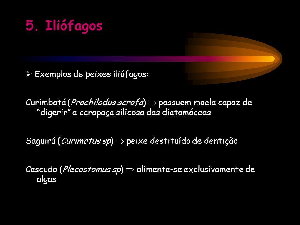5. Iliófagos Exemplos de peixes iliófagos: Curimbatá (Prochilodus scrofa) possuem moela capaz de digerir a carapaça silicosa das diatomáceas Saguirú (