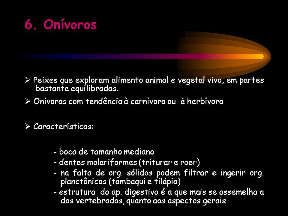 6. Onívoros Peixes que exploram alimento animal e vegetal vivo, em partes bastante equilibradas. Onívoras com tendência à carnívora ou à herbívora Car