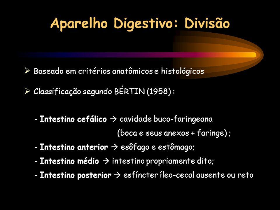 Aparelho Digestivo: Divisão Baseado em critérios anatômicos e histológicos Classificação segundo BÉRTIN (1958) : - Intestino cefálico cavidade buco-fa