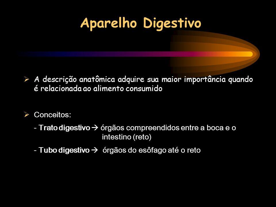 A descrição anatômica adquire sua maior importância quando é relacionada ao alimento consumido Conceitos: - Trato digestivo órgãos compreendidos entre