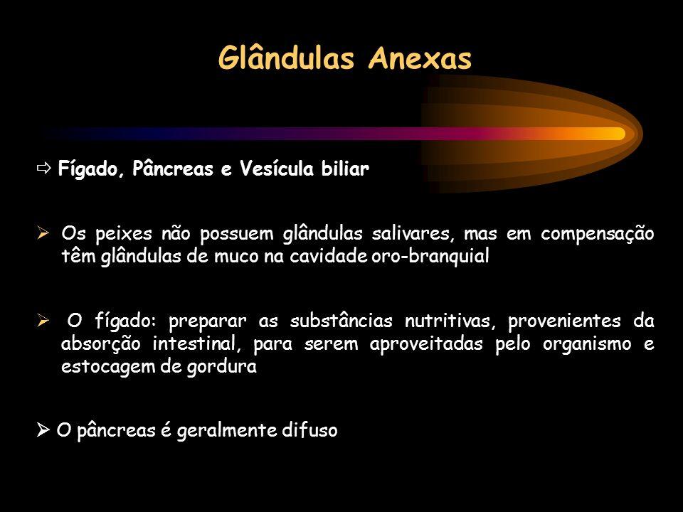Glândulas Anexas Fígado, Pâncreas e Vesícula biliar Os peixes não possuem glândulas salivares, mas em compensação têm glândulas de muco na cavidade or