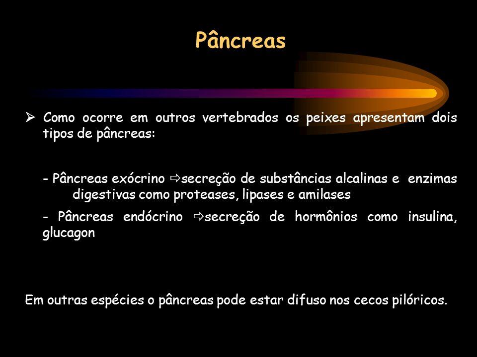 Pâncreas Como ocorre em outros vertebrados os peixes apresentam dois tipos de pâncreas: - Pâncreas exócrino secreção de substâncias alcalinas e enzima