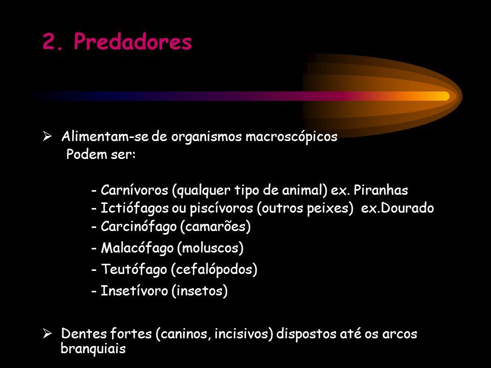 2. Predadores Alimentam-se de organismos macroscópicos Podem ser: - Carnívoros (qualquer tipo de animal) ex. Piranhas - Ictiófagos ou piscívoros (outr