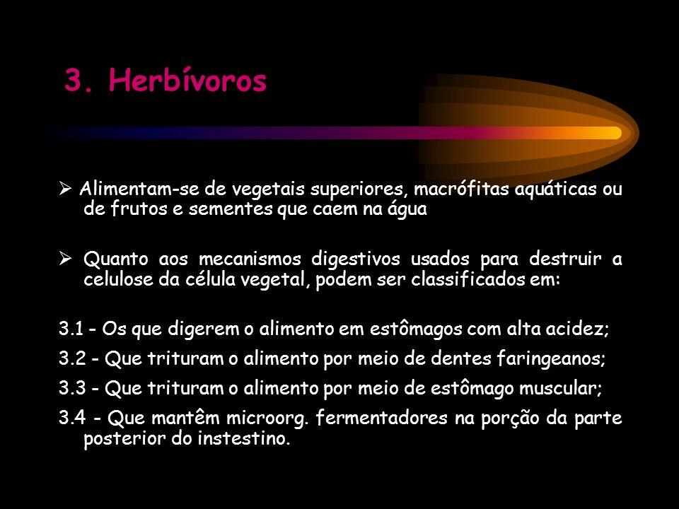 3. Herbívoros Alimentam-se de vegetais superiores, macrófitas aquáticas ou de frutos e sementes que caem na água Quanto aos mecanismos digestivos usad