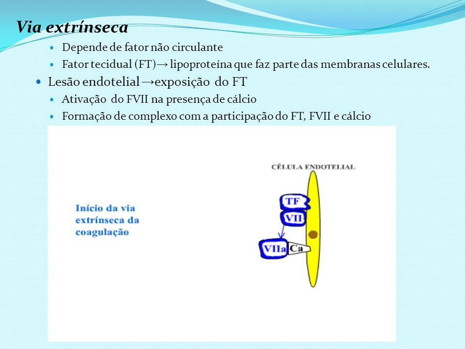 Via extrínseca Depende de fator não circulante Fator tecidual (FT) lipoproteína que faz parte das membranas celulares. Lesão endotelial exposição do F