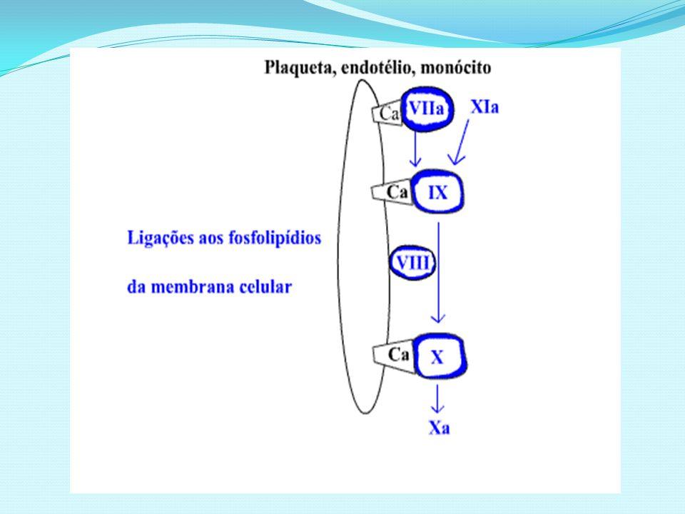 Geração da trombina Ação do FXa sobre a protrombina (FII) Participação do FV e cálcio na presença do fosfolipídio da membrana de qualquer célula Quando acontece na membrana plaquetária a geração da trombina é acelerada milhares de vezes Trombina: ação em múltiplos pontos no processo hemostático Ativação das plaquetas no trombo hemostático Ativa os fatores V, VIII, XIII Atua sobre fibrinogênio Liberação de fibrinopeptídios A e B gerando monômeros de fibrina, que ligam-se longitudinalmente e lateralmente formando os polímeros de fibrina Fibrina é solúvel pois monômeros são ligados por pontes de hidrogênio Atuação do FXIIIa que confere insolubilidade à fibrina