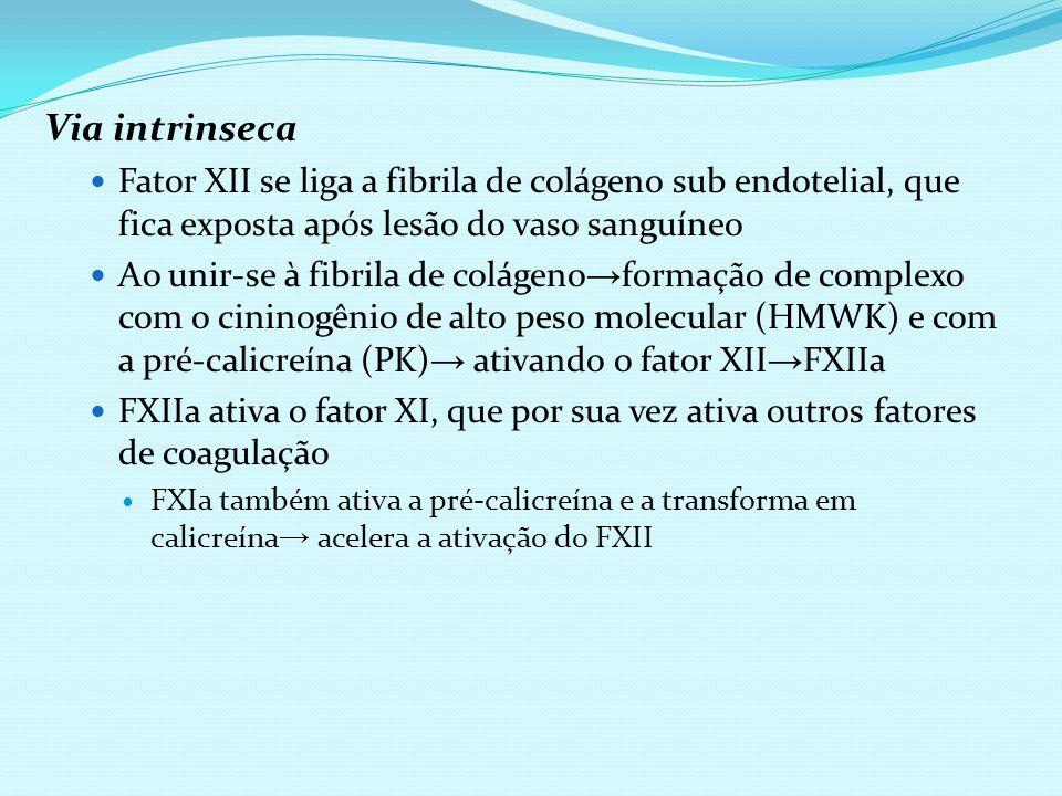 Via intrinseca Fator XII se liga a fibrila de colágeno sub endotelial, que fica exposta após lesão do vaso sanguíneo Ao unir-se à fibrila de colágeno