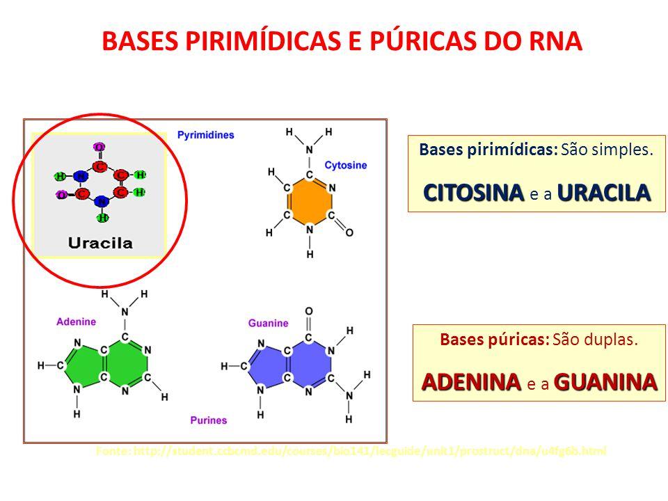 Fonte: http://student.ccbcmd.edu/courses/bio141/lecguide/unit1/prostruct/dna/u4fg6b.html BASES PIRIMÍDICAS E PÚRICAS DO RNA Bases pirimídicas: São sim