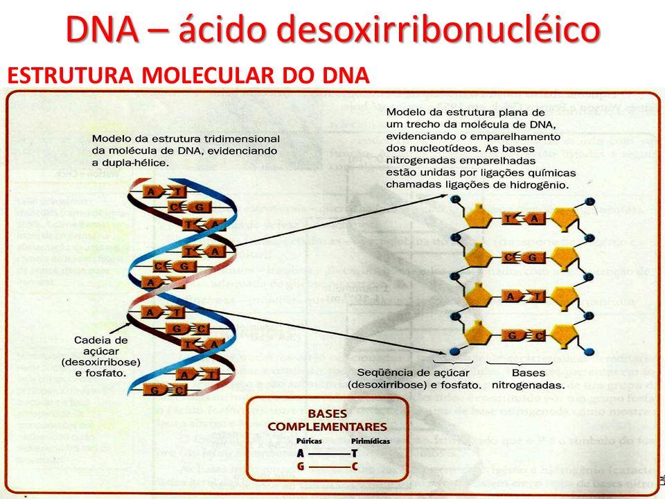 DNA – ácido desoxirribonucléico ESTRUTURA MOLECULAR DO DNA